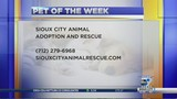 Pet of the Week: snag this Chihuahua