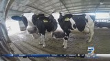 Dairy industry suffering across the nation